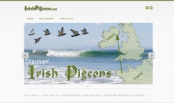 Discover Irish Pigeons