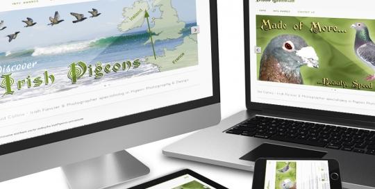 CMS responsive website of Irish Pigeons