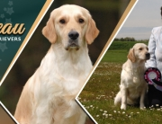 Facebook Timeline Cover image for Balibeau Golden Retrievers