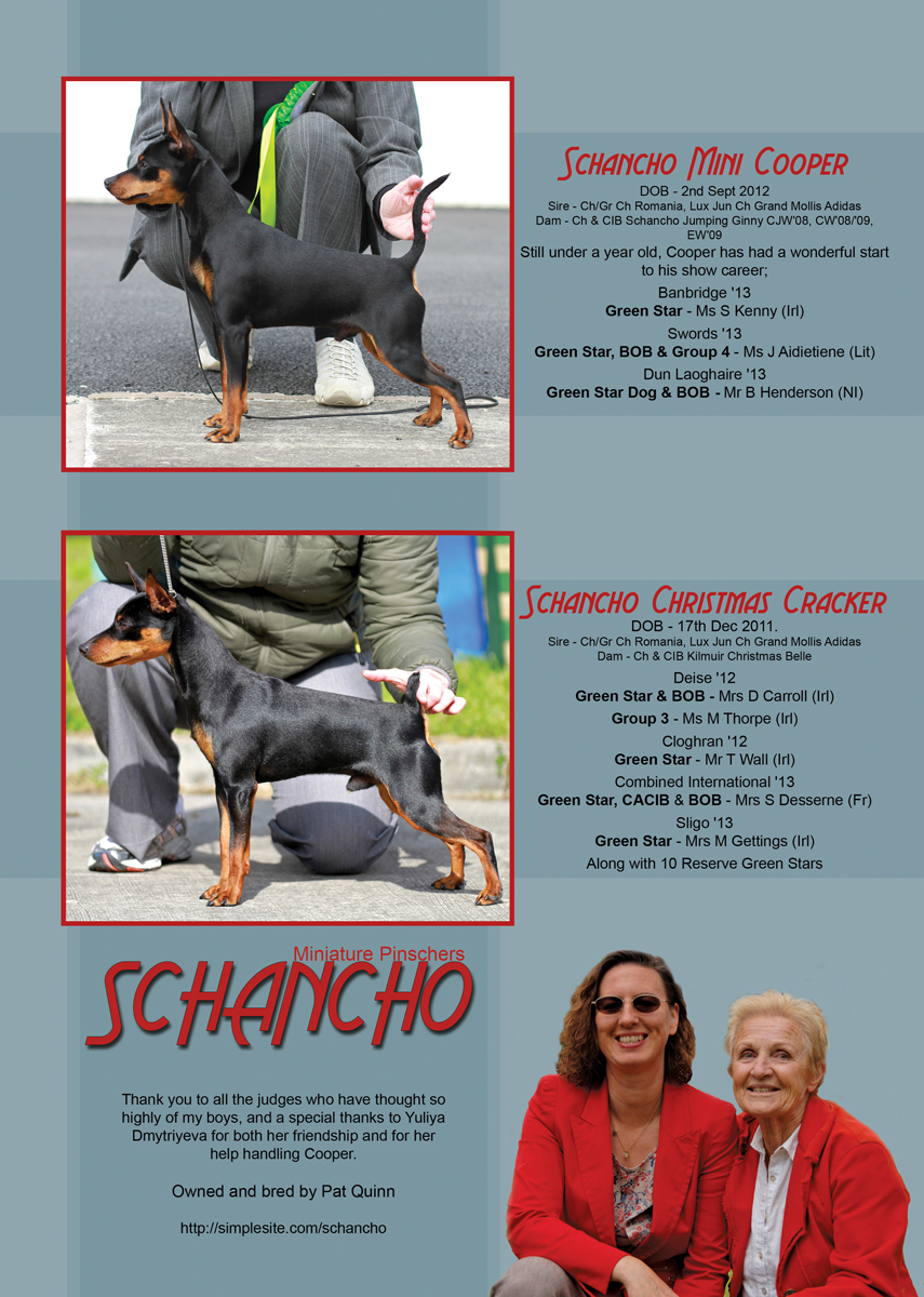 Advert (Full Page) created for Schancho Miniature Pinschers for the Show Dogs Ireland magazine