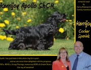 Half Page Advert for Kerrijoy Cocker Spaniels for Show Dogs Ireland